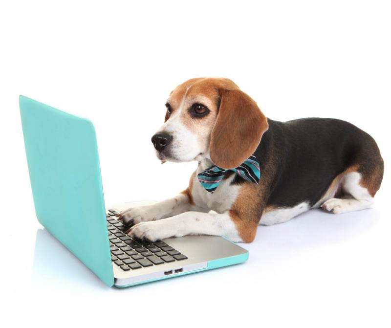 Tecnología práctica para salir de viaje conectar con nuestras mascotas