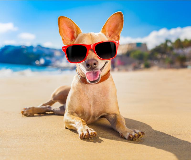 Consejos para viajar de camping con perros de raza pequeña