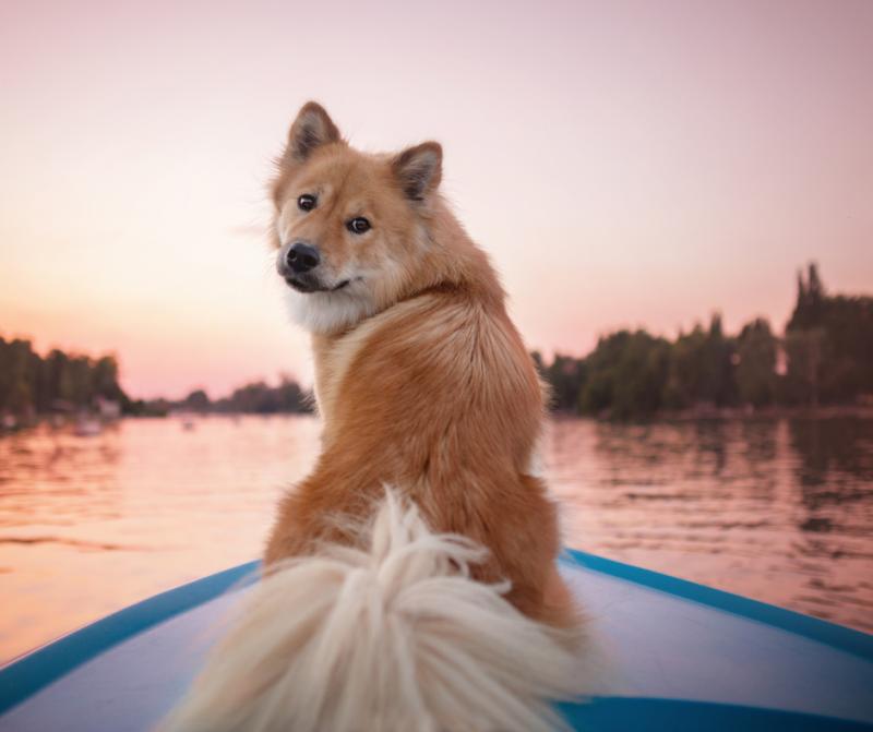Turismo canino y las mejores experiencias y sensaciones con tu perro