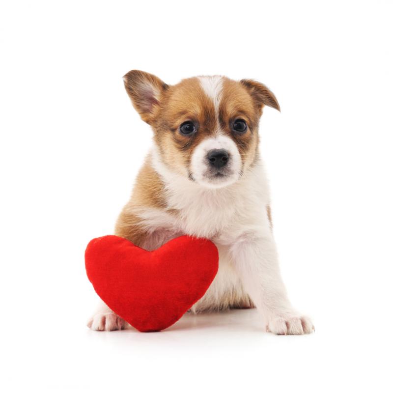 Este San Valentín vete de camping con tu mascota a un Bungadogs
