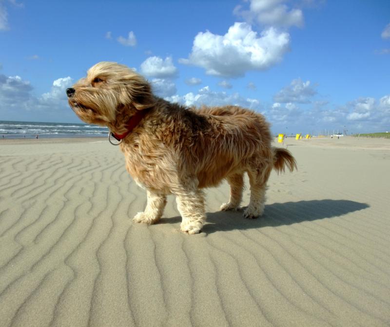 Playas para ir con perros cerca de nuestros Bungalows con encanto este verano 2021