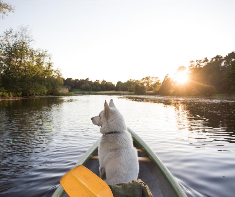 Consejos de viaje para ir de camping  o bungadog con vuestra mascota