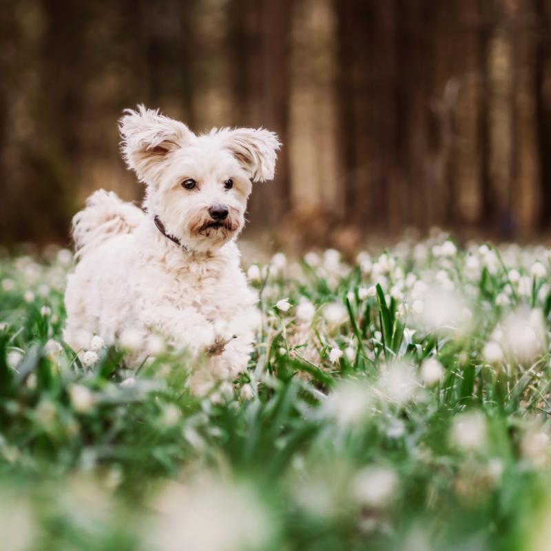 4 consejos para cuidar a tu perro en primavera