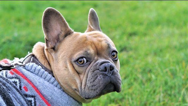 5 Importantes consejos para cuidar a tu perro en invierno