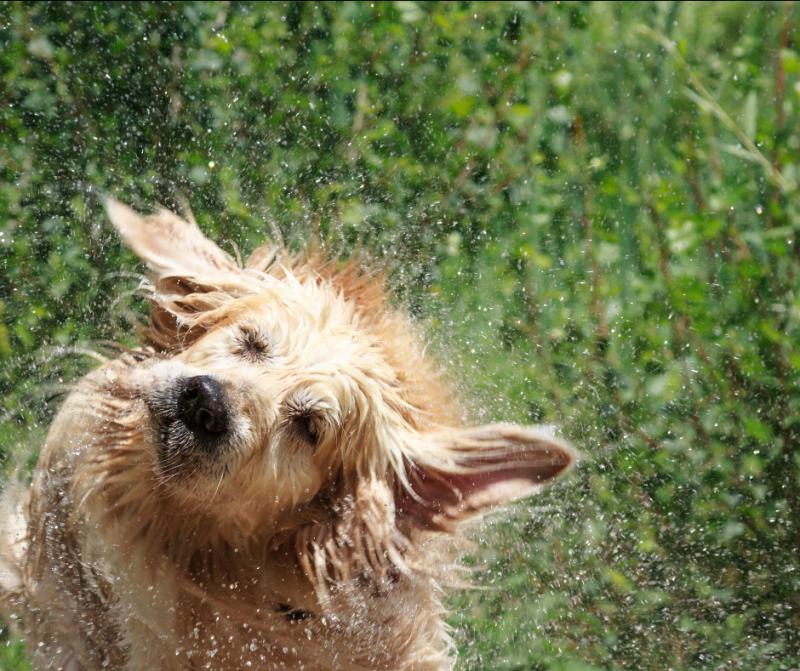 5 Recomendaciones para refrescar a tu perro los días de más calor