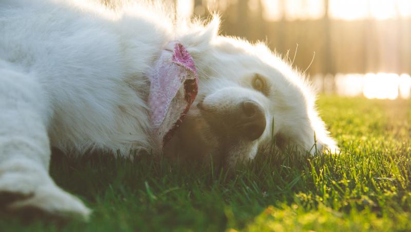 Vitamina D para tu mascota, es hora de disfrutar de los primeros rayos de sol