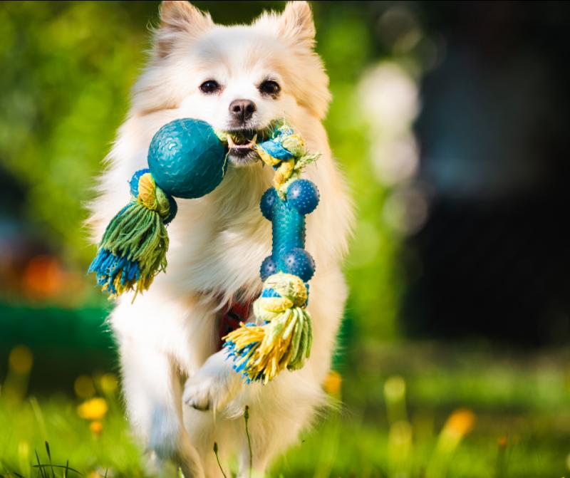Accesorios y recomendaciones para viajar con tu perro este verano